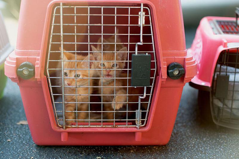 Kittens In Carrier Hurricane Ida
