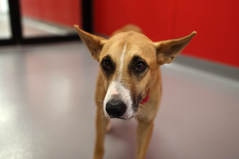 Krissy Rescued Dog South Georgia