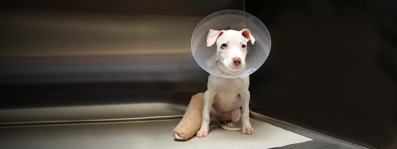 molly broken leg puppy atlanta humane society